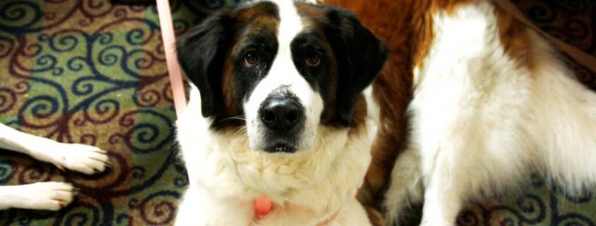 #WorkTrends Recap: Pet Insurance as an Employee Benefit
