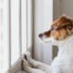 post-pandemic pet care